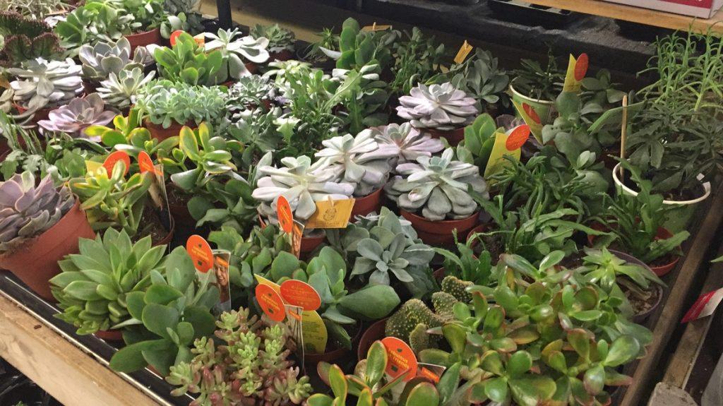 Plantes pour terrarium