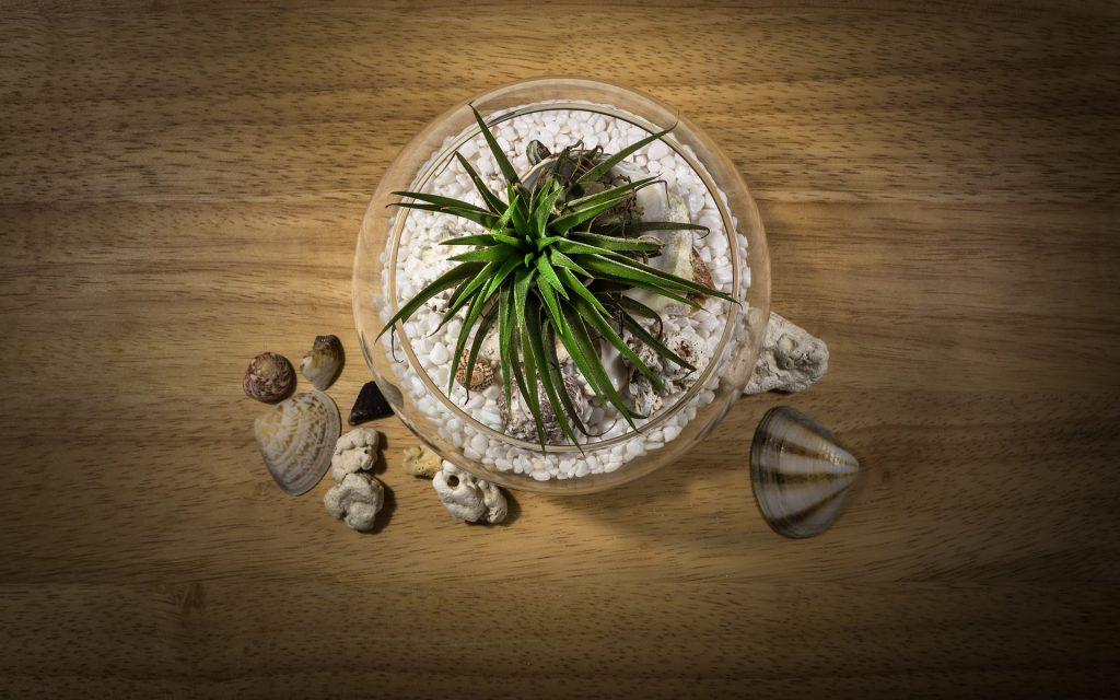 Terrarium avec cailloux, coquillages